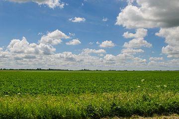 Landschap van Cor Bak
