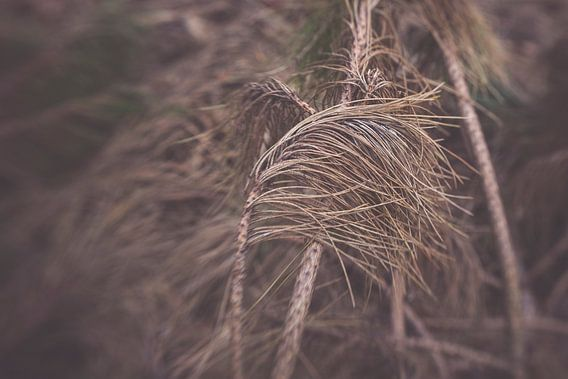 Gevallen tak van naaldboom