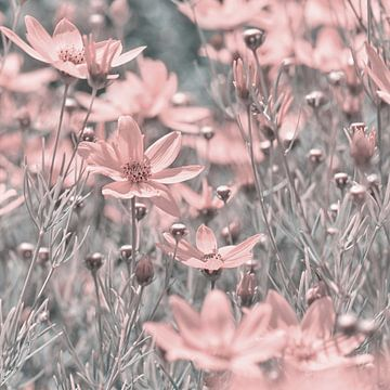 Roze bloemen van Violetta Honkisz