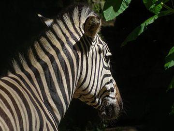 Zebra in de zon  van Sandra de Moree