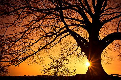 Zon en boom van Joop Snijder