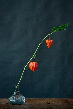 Fotodruck einer Laternenpflanze vor dunklem Hintergrund von Jenneke Boeijink