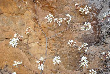 Fleurs sur un fond de couleurs terreuses sur M de Vos