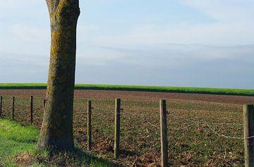 Autumn in Limburg von Marlies Prieckaerts