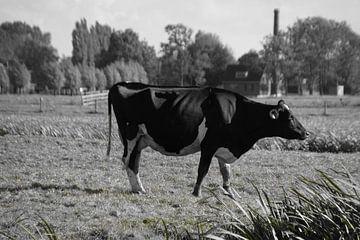 Kuh in Woerdense Verlaat von Jan Nuboer