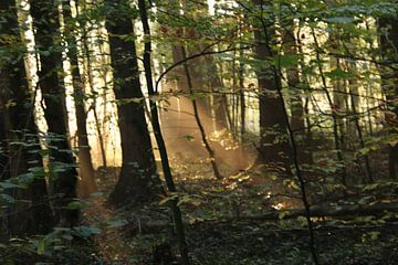 De ochtendzon door de bomen van matthijs iseger