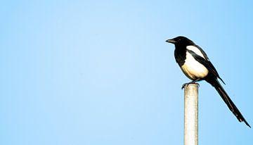 sitting bird zeeland sur Daphne Brouwer