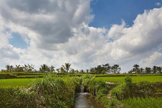 Mooi landschap met rijstterrassen en kokospalmen dichtbij Tegallalang-dorp, Ubud, Bali, Indonesië.