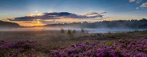 Panorama von violettem Heidekraut auf The Teut von