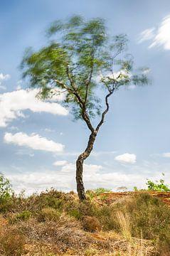 Dansende boom van Mark Bolijn