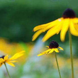 Eindeloos veld vol gele bloemen van Anne Hana