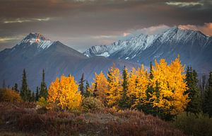 Herfst landschap van