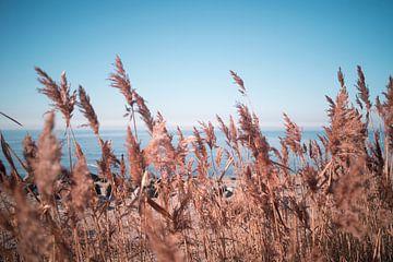 Duinen met uitzicht op het IJsselmeer van Jolien Kramer