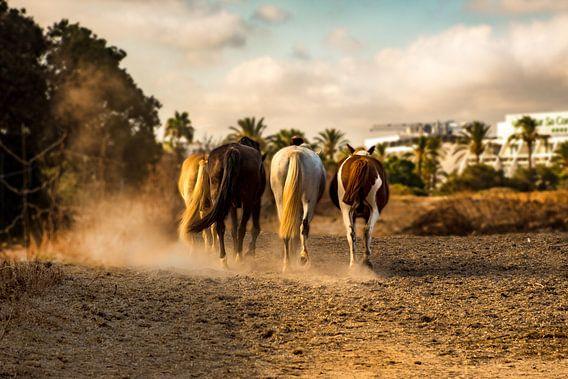 Mallorca horses