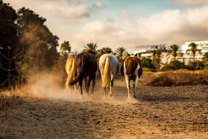 Mallorca horses van Natasja Claessens