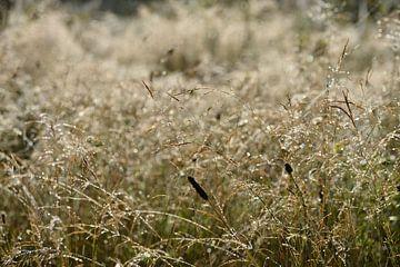 Nat gras bij zonsopkomst van Theo van Woerden