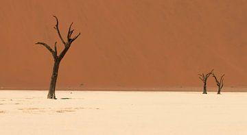 De dode bomen van de Deadvlei (Sossusvlei - Namibië) van Bas Ronteltap