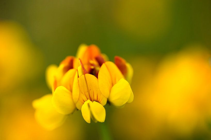 Warme gele en rode kleuren in de Rolklaver van Gonnie van de Schans