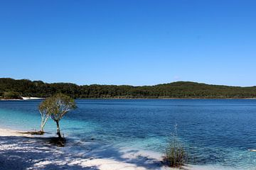 Lake McKenzi von Nadia Langenberg