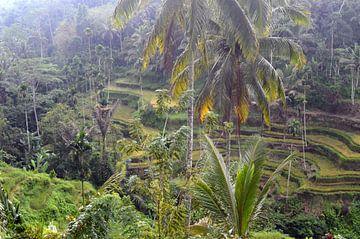 Rijstterassen Bali van Ingrid Bargeman