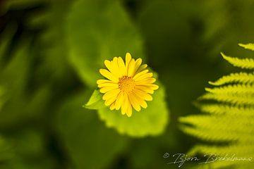bloem van Bjorn Brekelmans