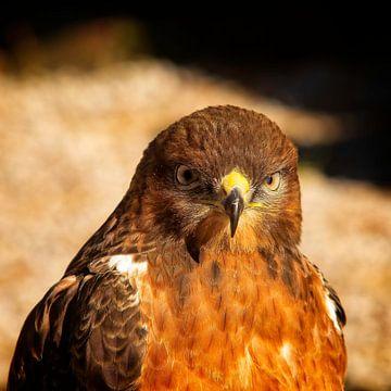 Raubvogel von Eric van den Berg