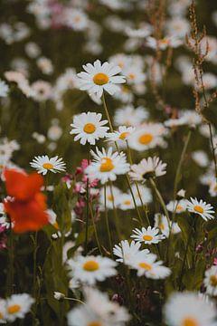 Ein Blumenfeld mit Gänseblümchen und einem Mohn von Robin van Steen