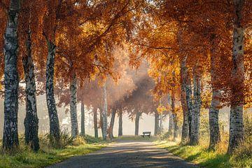 Autumn bench van