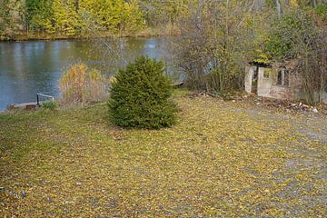 Herbst an der Saale in Halle Saale in Deutschland von Babetts Bildergalerie
