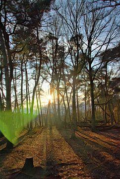 Sonnenlicht in einem Winterwald