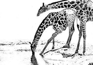 drinkende giraffes von Henk Langerak