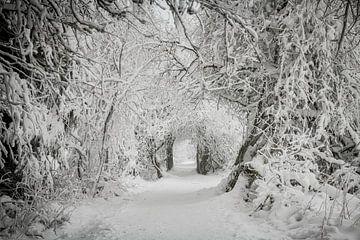 Winter in de Hoge Venen van Jim De Sitter