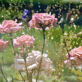 Roses derrière la fontaine sur Christine Nöhmeier