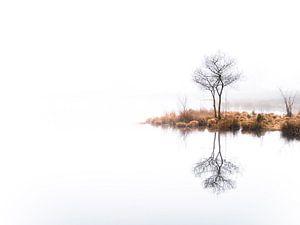 Twin trees,  again (kleur) van