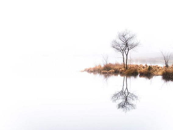 Twin trees,  again (kleur) van Lex Schulte