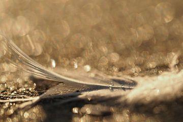 Eine Feder am Strand der Opalküste in Frankreich.