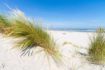 Strand und Dünen von Ameland von Nicole Nagtegaal