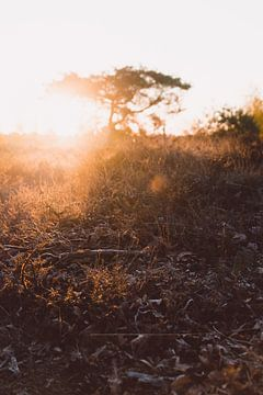 Heide bei Sonnenaufgang von Robin van Steen