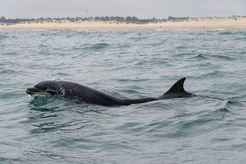 Tuimelaar Dolfijn Schotland van Merijn Loch