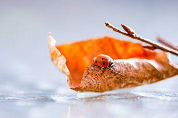 Herbst-Blätter von Gitta Reiszner