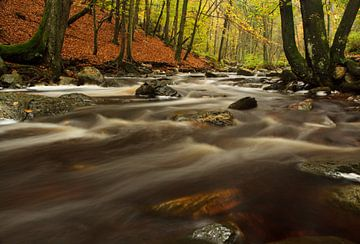 Herfst aan de Hoëgne, in de Belgische Ardennen von Hans Koster