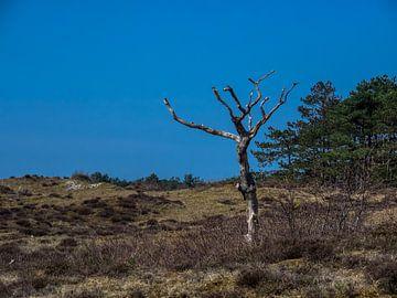 Blauwe lucht op de hei van Martijn Tilroe