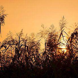 Zonsondergang van Maren Oude Essink