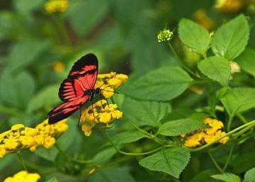 Makro eines Schmetterlings von Anja B. Schäfer