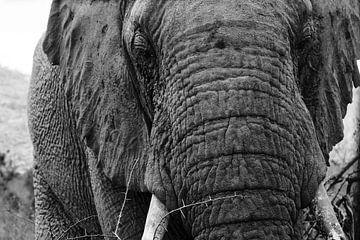 Olifant in Pilanesberg van Leon Buijs