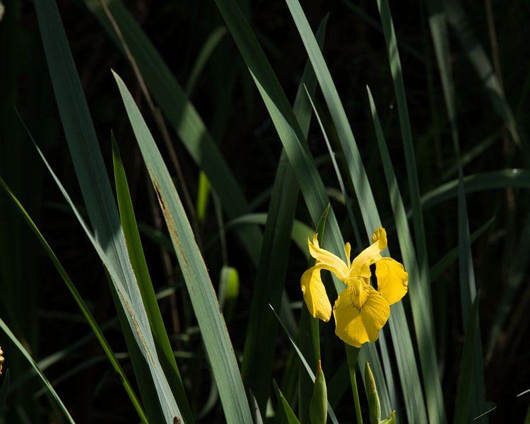 Like an Orchid van Hans Krijnen