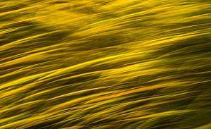 Storm over het korenveld
