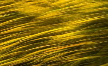 Storm over het korenveld van