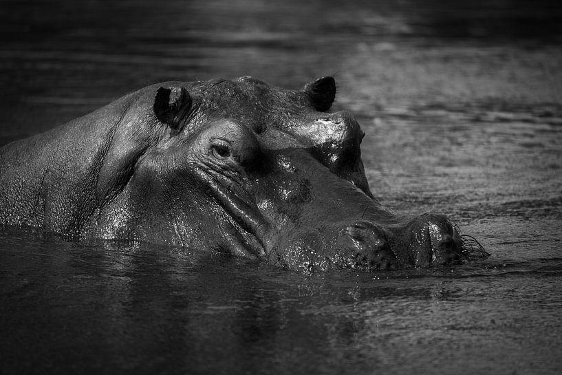Nijlpaard van Ed Dorrestein