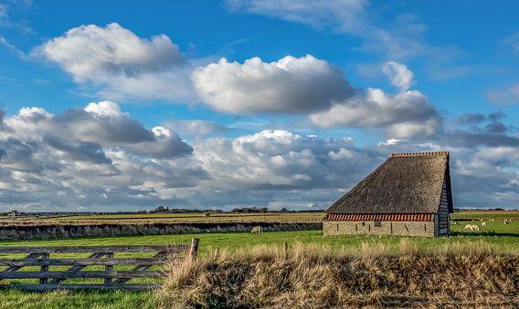 Schapenboet Texel van Texel360Fotografie Richard Heerschap